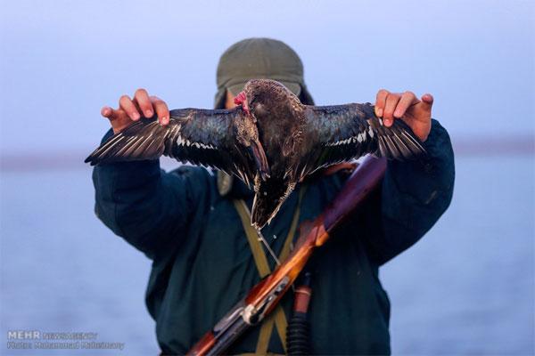داستان بیویرایش شکارچیان مملکت